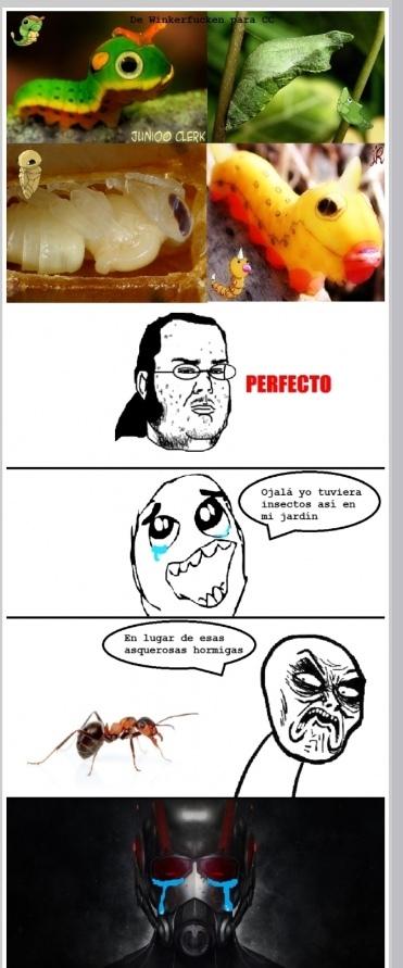 POBRE ANTMAN - meme
