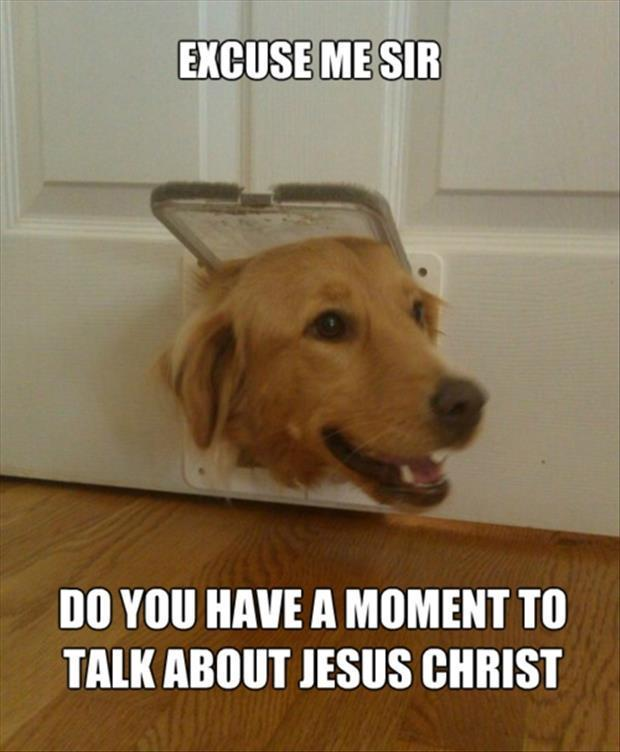 Jesus doggy - meme