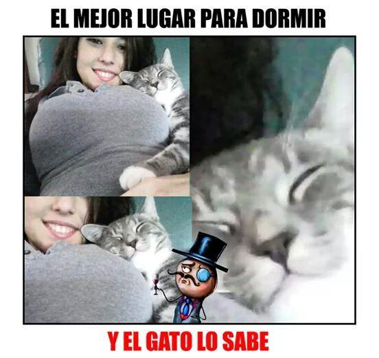 El gato sabe - meme