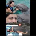 Golfinho amiguinho