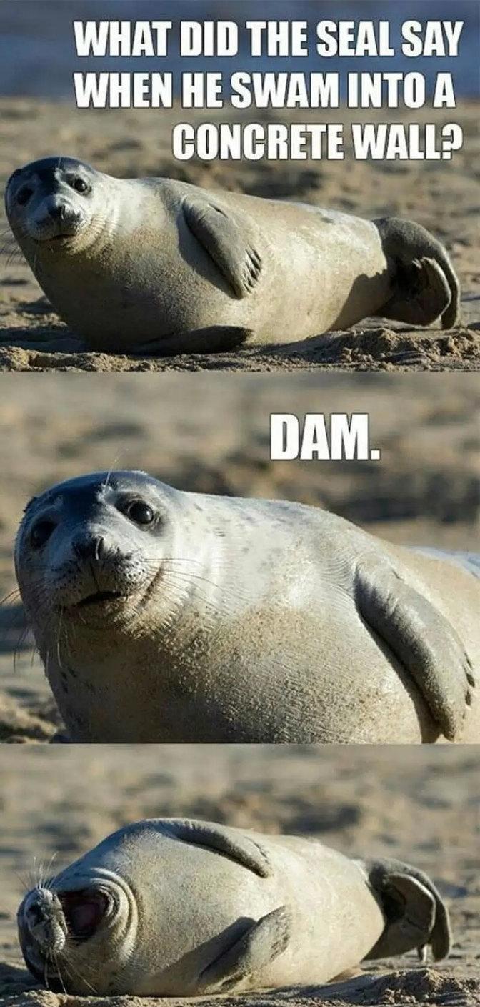 Dam - meme
