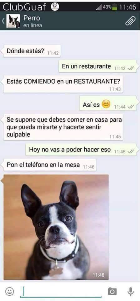 conversaciónes con mi perrito2 - meme