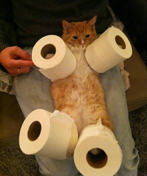 Piégé et faire chier son chat XD - meme