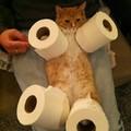 Piégé et faire chier son chat XD