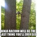 Badass racoon