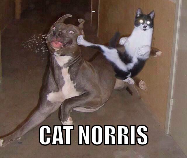 I Norris sono una grande famiglia...... - meme