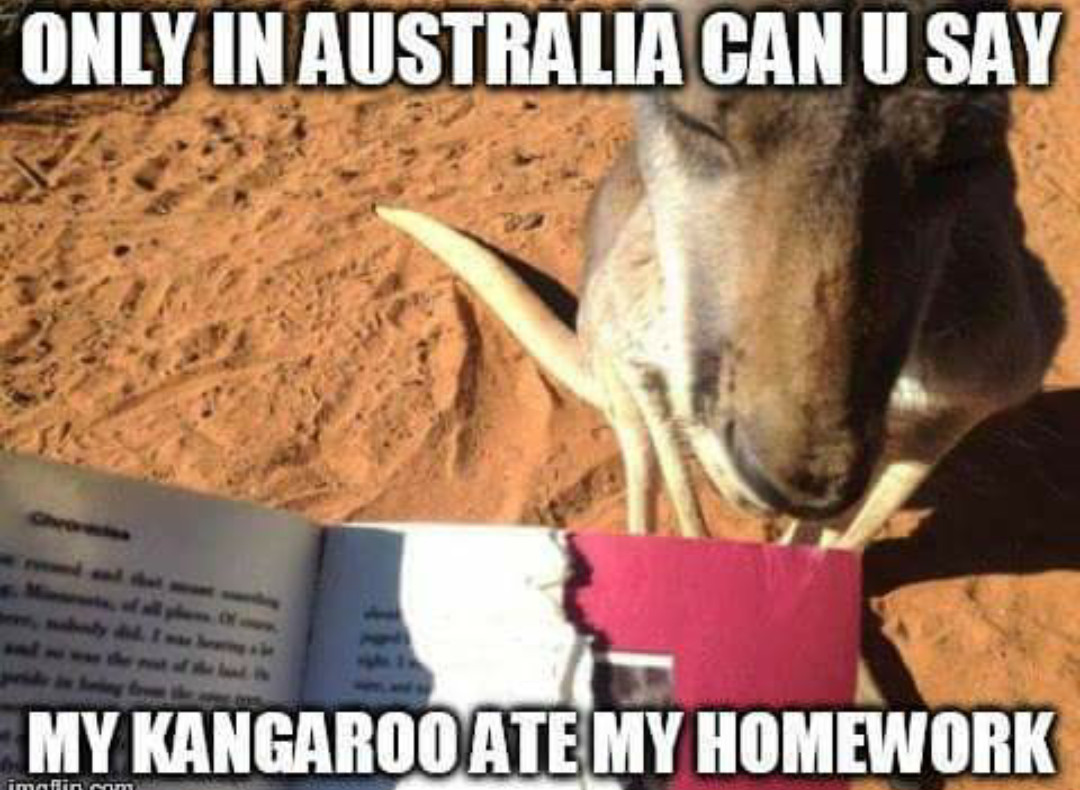 Thanks Kangaroo - meme