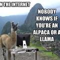 No drama just llama