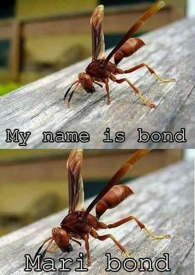Mary Bond - meme
