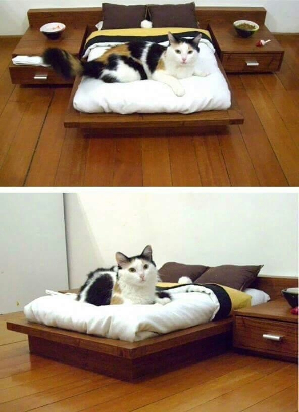 Not sure if small bed or huge cat - meme