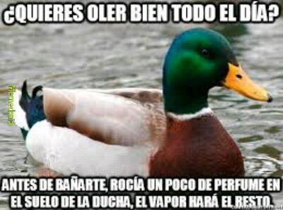 Pato - meme