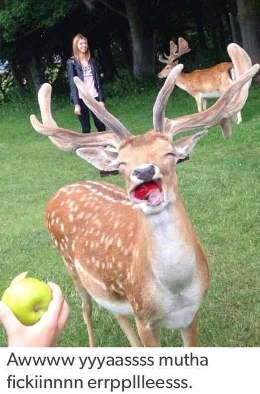 Haha apples - meme