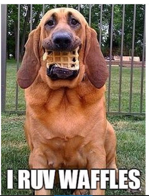 Ruv waffles - meme