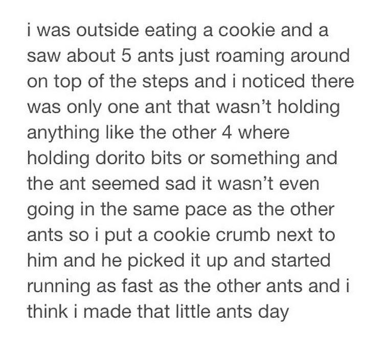 Making an ant happy - meme