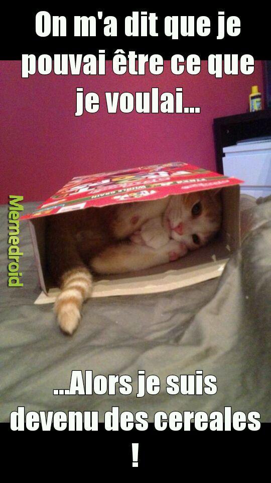 Miel-Cats - meme