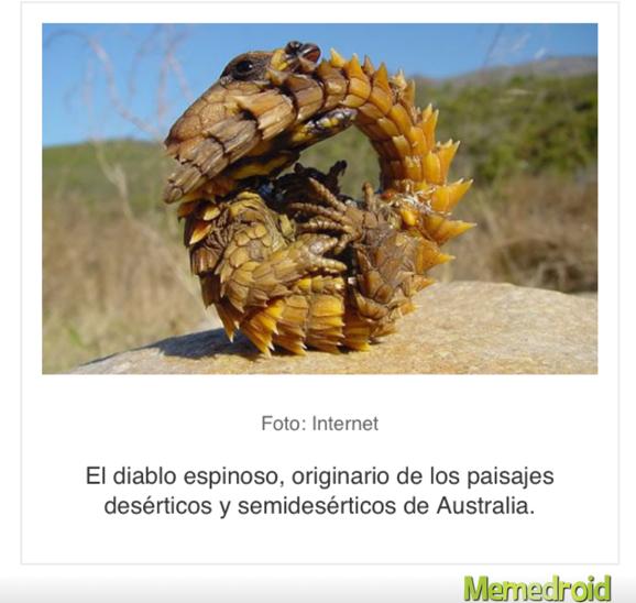 El lagarto pro by lubock - meme
