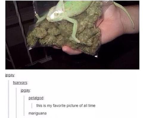 Second comment smokes mariguana - meme