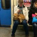 Seulement en Russie oklm avec mon renard