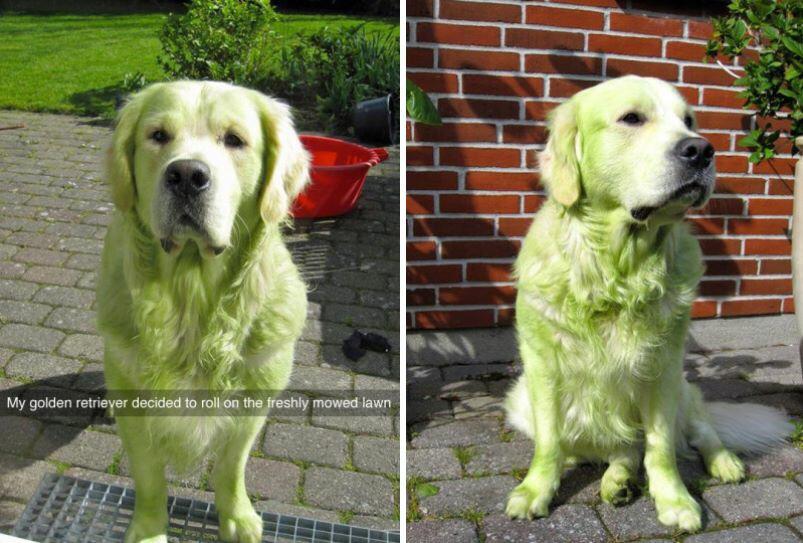 Green doge - meme
