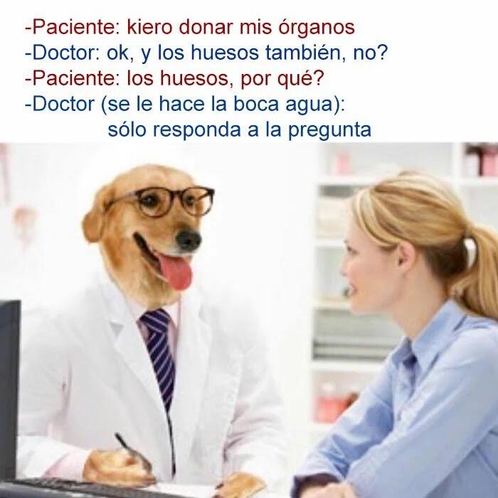 Las aventuras del doctor perro - meme