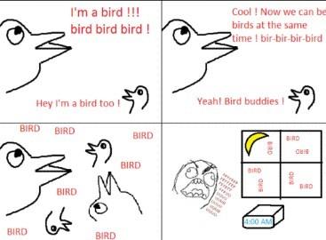Birds like to bird all night long - meme
