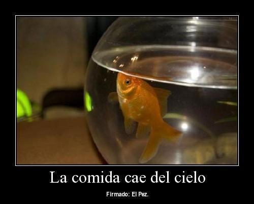La vida de un pez. - meme