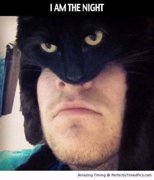 Batnyan? No?.... no. - meme