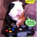porquinho da india gamer