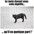 Le chat noir!