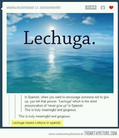 Lechuga - meme