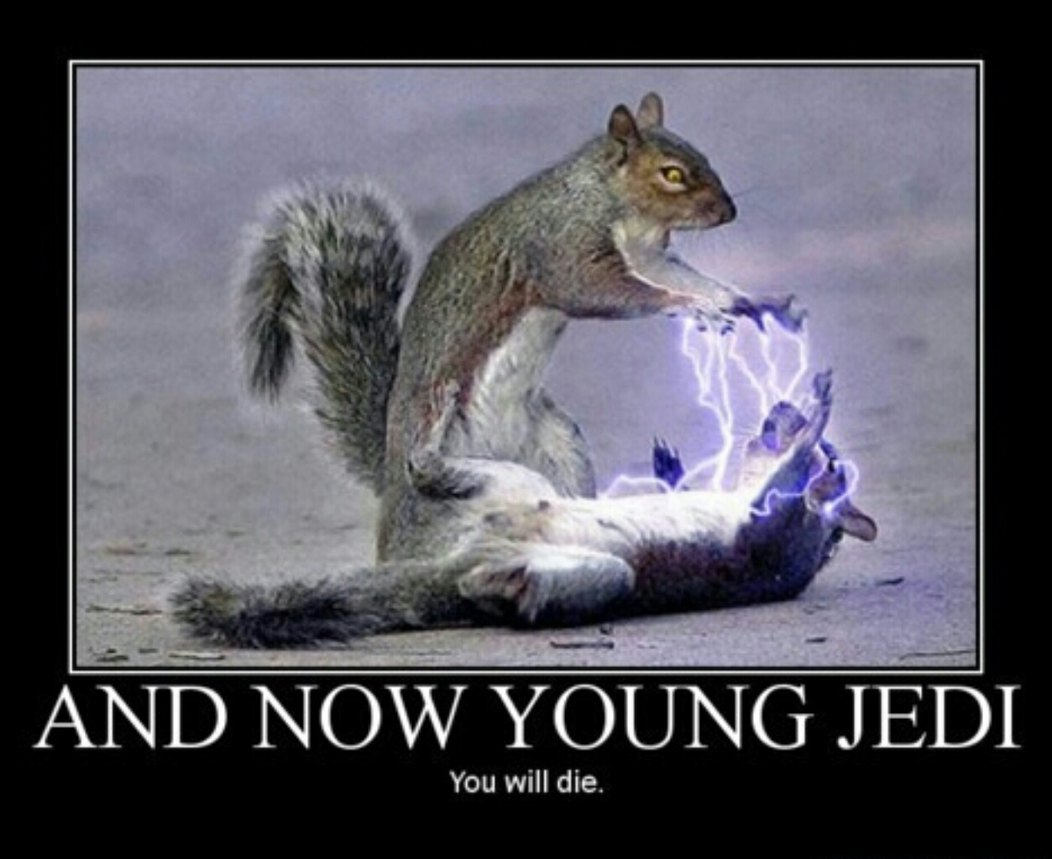 Squirrel Wars - meme