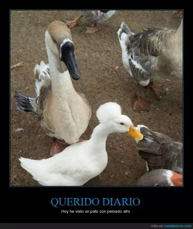 MC Duck - meme