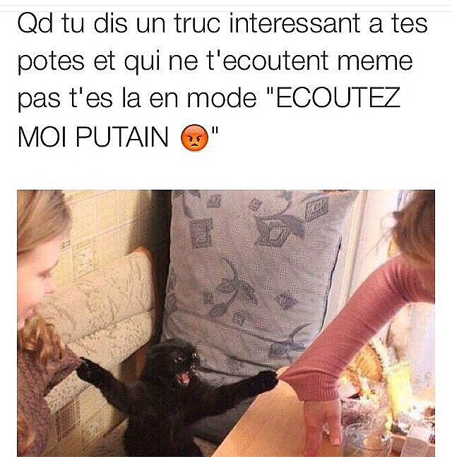 C pck c un black le chat ( 2nd degre) - meme