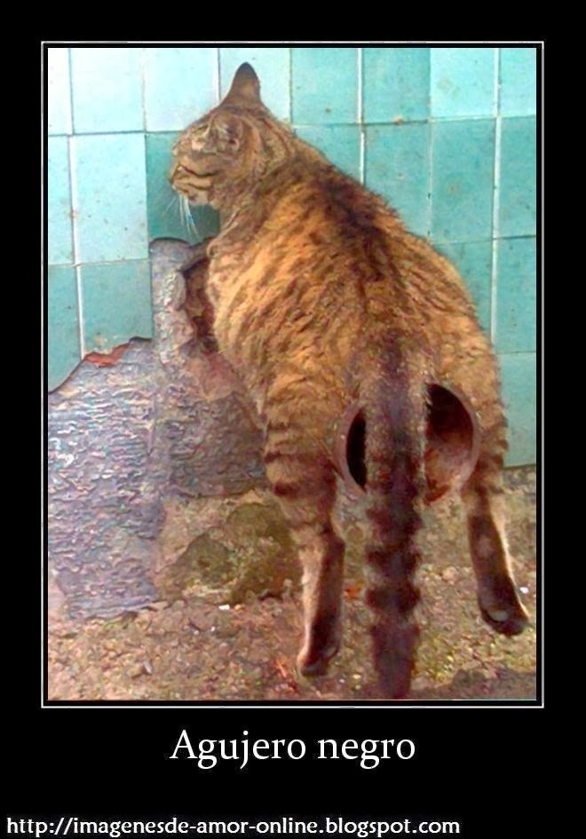 546cac27caf38 bujero negro meme by killeroth ) memedroid,Cat Negro Meme