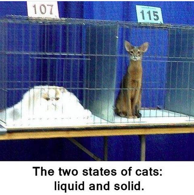 Il y a deux états de chat : liquide et solide. - meme