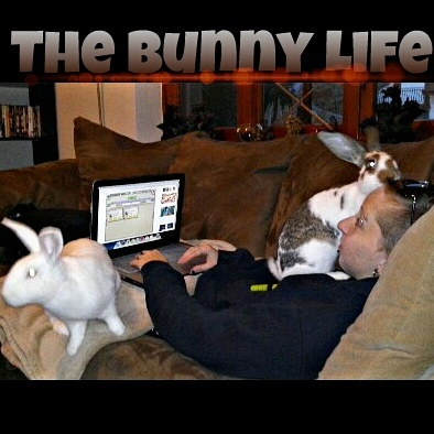 Life with bunnies - meme