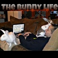 Life with bunnies