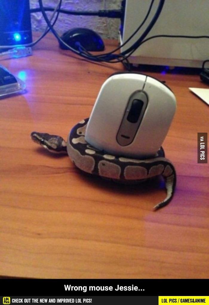 Wrong mouse... - meme