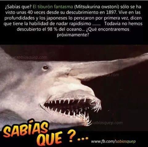 Algun dia sabremos que hay en las profundidades del oceano ? - meme