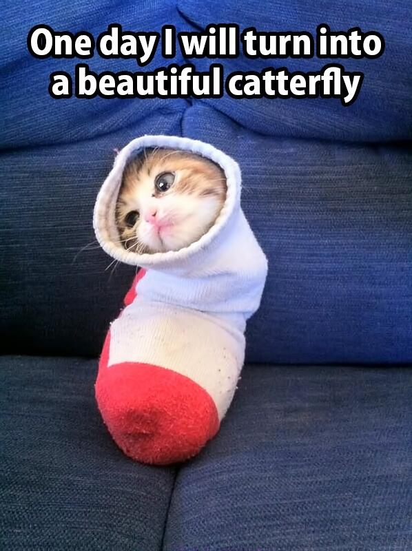 Catterfly, I will be... - meme