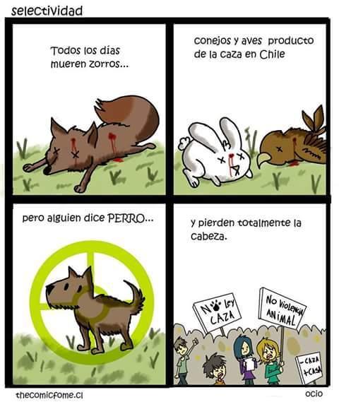 No maten a los perros por mas que sean de la calle :'( - meme