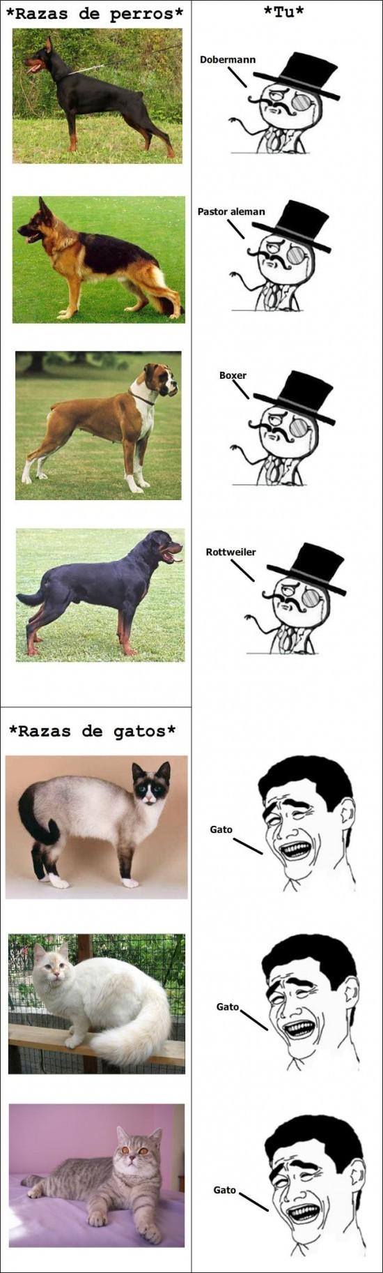 Razas de perros y gatos - meme