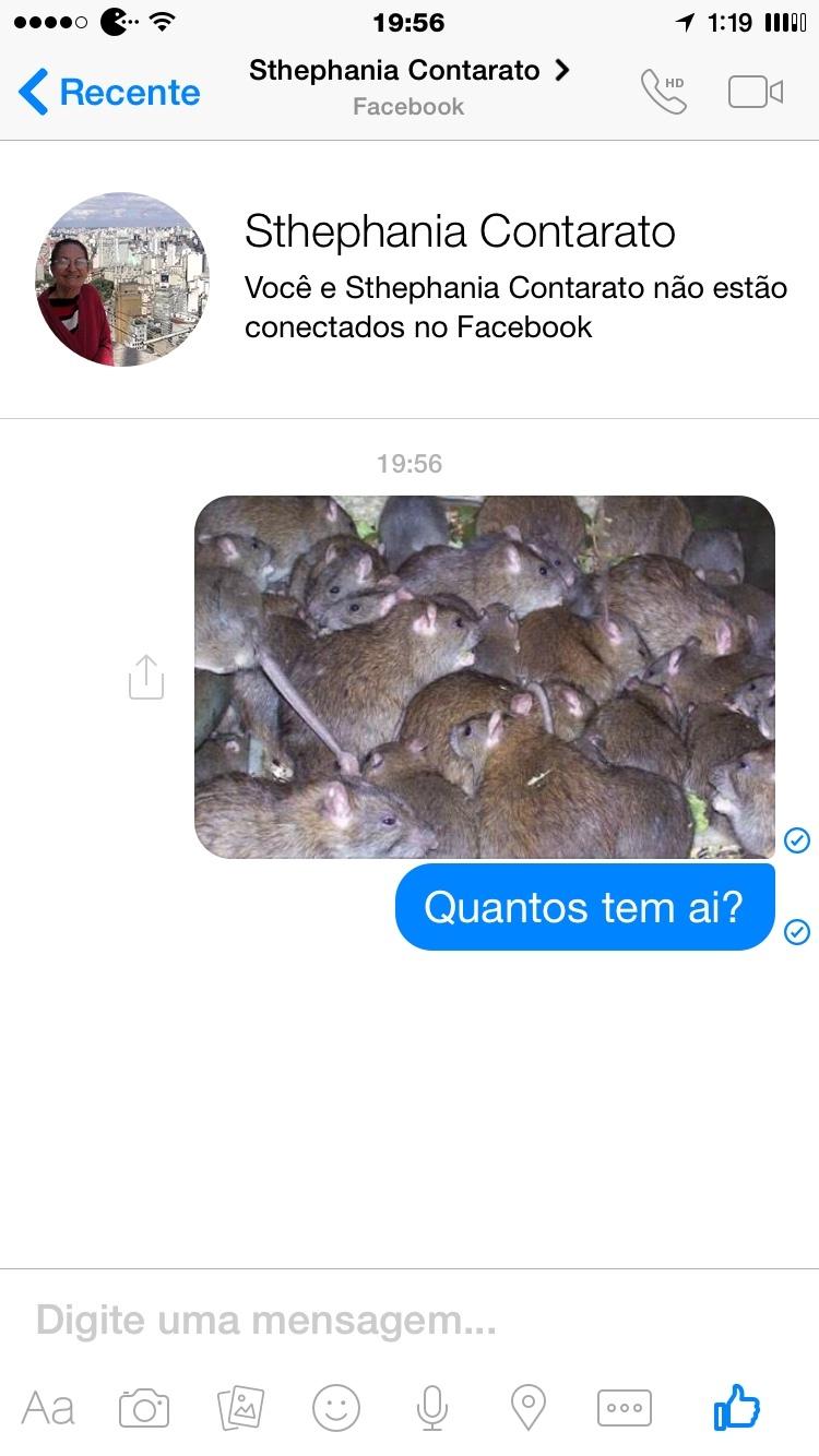 ratinhos - meme