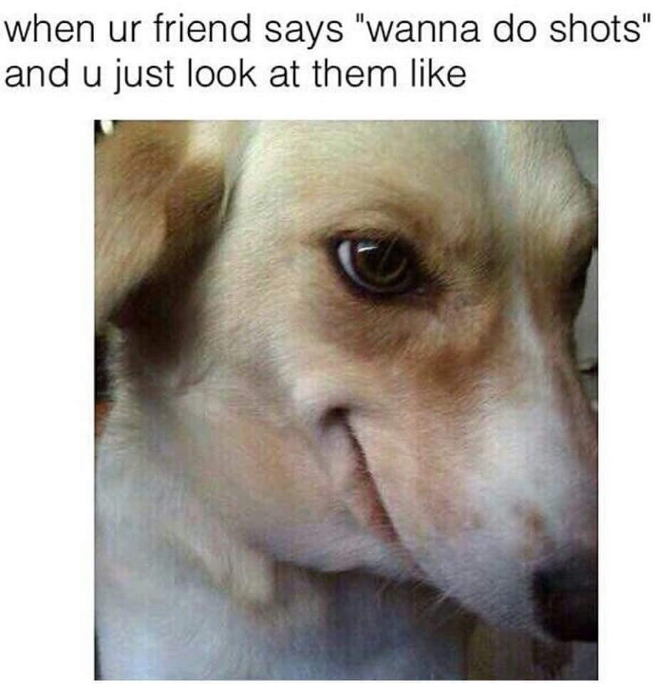 Dogs have alcohol problems - meme