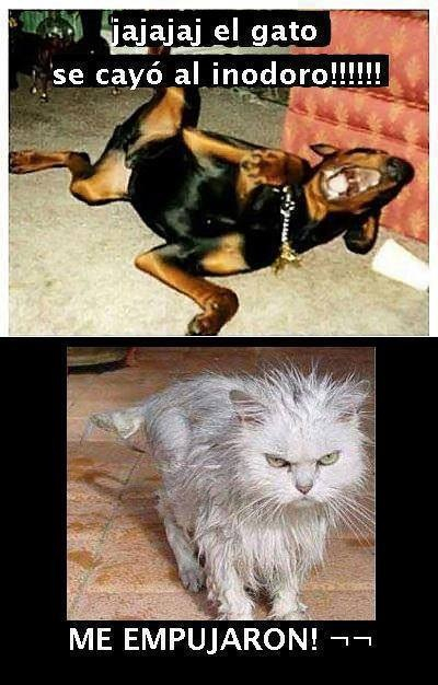 Gato mojado - meme