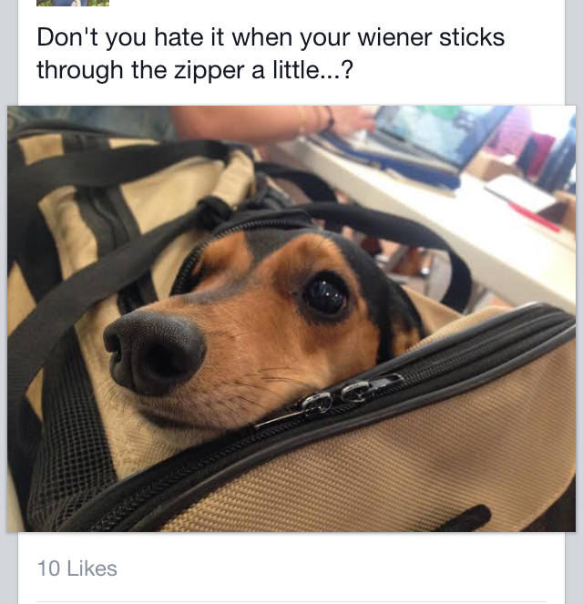 Yes, my wiener is sticking out...  He just wants to say Hi! - meme