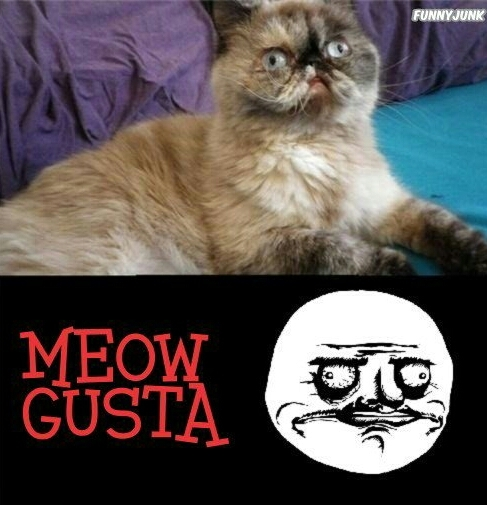 Meow gusta ! - meme