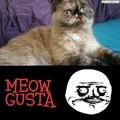 Meow gusta !