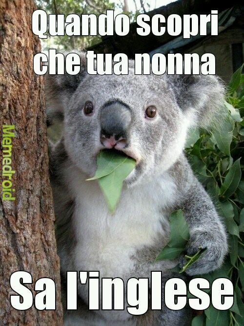 Koalo - meme