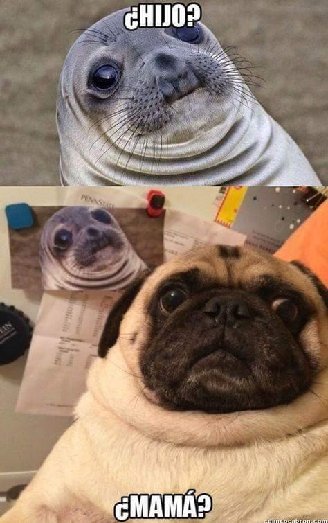 Seal and Pug - Meme by Xavi-19 :) Memedroid